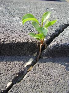 plant in sidewalk